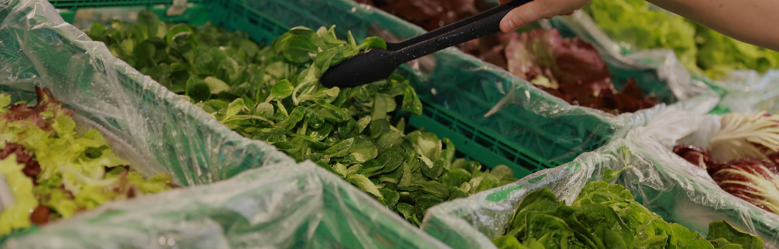 Bio Gemüse und Früchte
